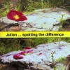 Julian - Spotting The Difference